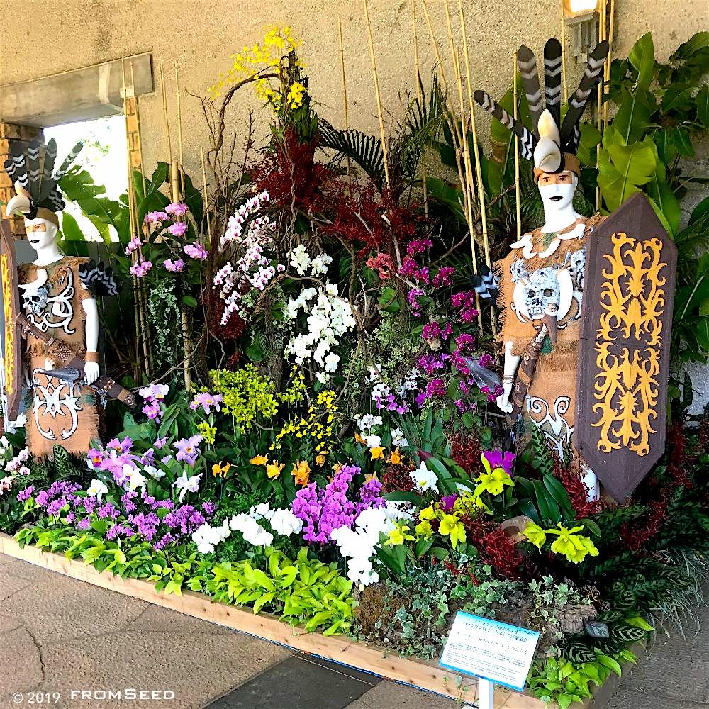 沖縄国際洋蘭博覧会 ディスプレイ審査の部 OIOS2019 インドネシア